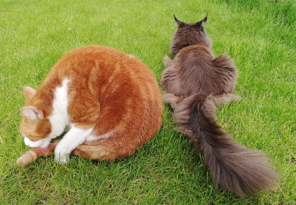Manchmal mit Katzenbesuch